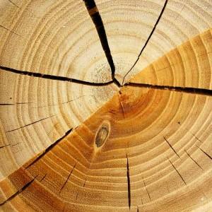 Holz schafft wärme